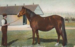 GAS by AYRSHIRE - Illuminata , UK , 1908