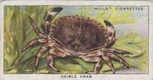 Wills Vintage Cigarette Card The Sea-Shore No 28 Edible Crab  1938