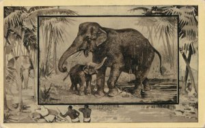 Africa Safari 1909 Series by Mintz of Chicago - Elephant and Calf - DB
