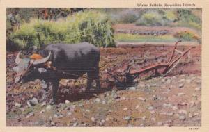 Water Buffalo with Native Plow - Hawaii - Linen