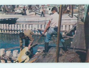 Unused Pre-1980 Fishing CATCHING GIANT TURTLE Key West Florida FL hn2403