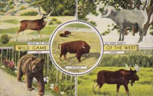 Wild Game Of The West Bear Moose Deer and Big Horn Sheep