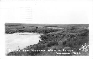 Valentine Nebraska~Elk @ Fort Niobrara National Wildlife Refuge~1954 RPPC