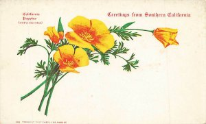 Greetings From Southern California Poppies UDB VTG  P85