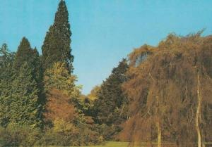 Wigmore Circle + Betula Pendula Arboretum 1970s Hereford Postcard