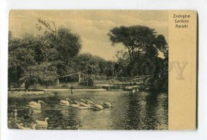287259 PAKISTAN KARACHI ZOO Zoological Garden Vintage RPPC