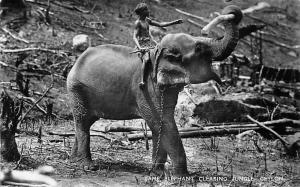 Ceylon, Tame-Elephant Clearing Jungle