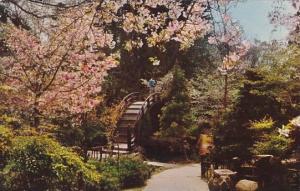 California San Francisco Japanese Tea Garden 1955