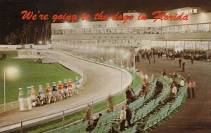 Greyhound Racing in FLORIDA, 40-60s; We're going to the dogs in Florida