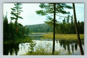 Ontario- Canada, Algonquin Provincial Park, General Scenic View, Chrome Postcard