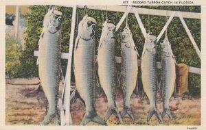 Record Tarpon Fish Catch , Florida , 1910s