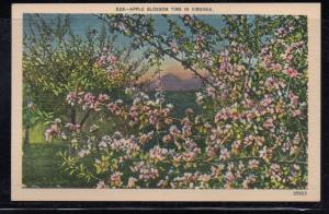 Virginia colour postcard Apple Blossom Time in Virginia unused