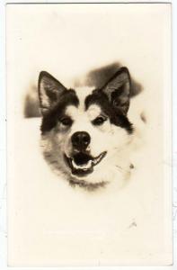 RPPC, Husky / Dog, Alaska