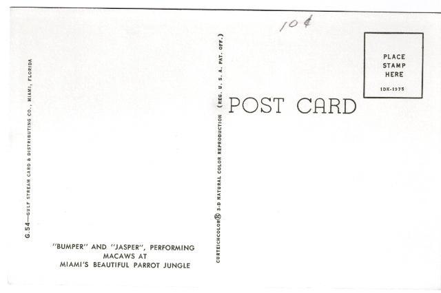 Bumper and Jasper Parrot Jungle Miami FL performing Macaws 1961 Curteich Postcar