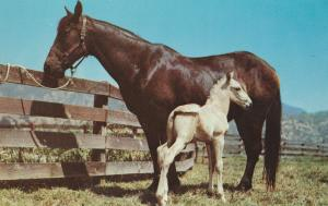 Mare and Foal Postcard Vintage Very Nice Horses
