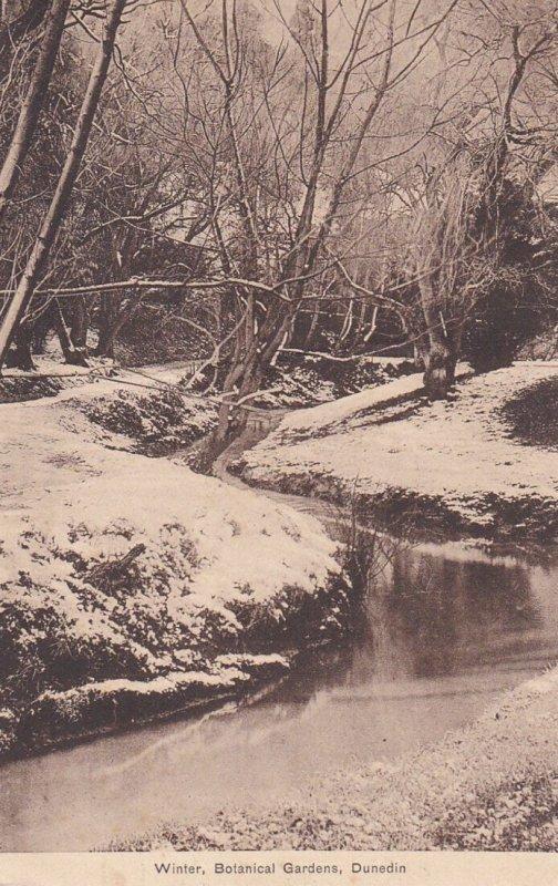 DUNEDIN, New Zealand, 1909; Winter, Botanical Gardens