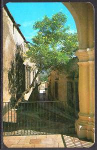 Kiss Alley,Alamos,Son,Mexico BIN