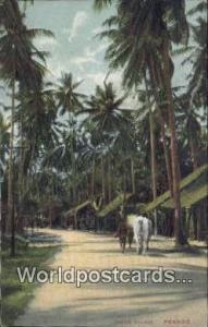 Penang Malaysia, Malaya Native Village  Native Village