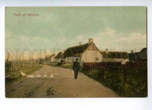 144786 DENMARK Parti af Gilleleje geese Vintage postcard