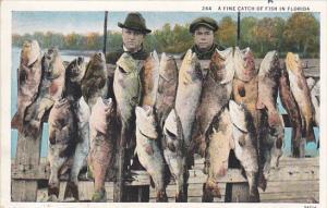 Florida Fishing A Fine Catch Of Fish Curteich