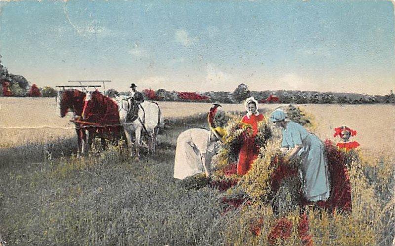 Harvesting Farming 1916