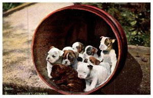 Dog ,  Bull dog  puppies in Barrell