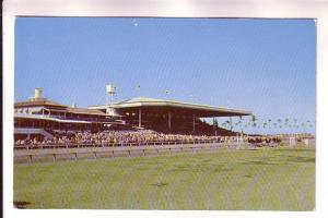 Race Track, Horses, People in Stands, Tropical Park, Coral Gables,