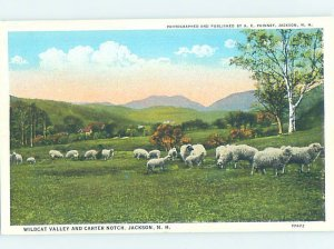W-border PANORAMIC Jackson In White Moutains - Near Conway & Berlin NH AF0699@