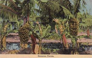 Florida Bananas
