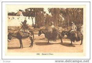 Three Donkeys, Retour a l´Oasis, 1910-20s