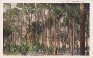 Pine And Palm Forest Florida
