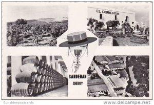 Spain Jerez Saandeman Vineyards and Bodegas Real Photo
