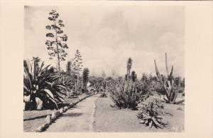The Cactus Garden in the Henry E. Huntington Library and Art Gallery, San Mar...