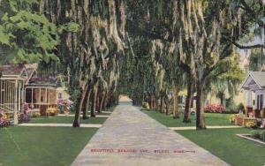 Mississippi Biloxi Beautiful Benachi Avenue 1943