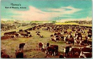 Arizona Postcard TOVREA'S World's Largest Feeding Pen Operation Beef Cattle