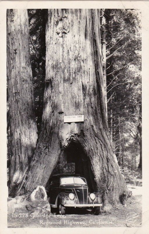 Car Driving Through The Coolidge Tree Redwood Highway California Real Photo 104