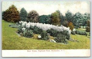 Rochester New York~Highland Park~Bear Grass Garden~c1905 Postcard