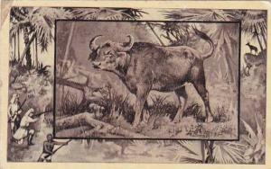 M J Mintz Animal Series The African Buffalo