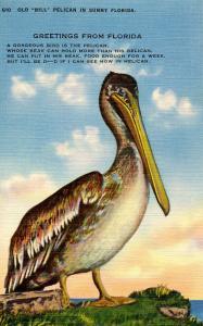 FL - Pelicans-- Old Bill