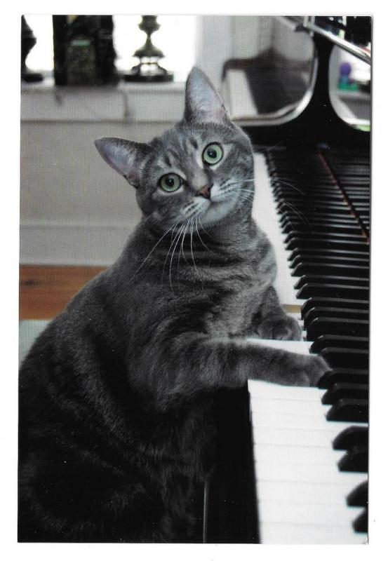 Nora The Piano Cat Advertising Card 4 X 6