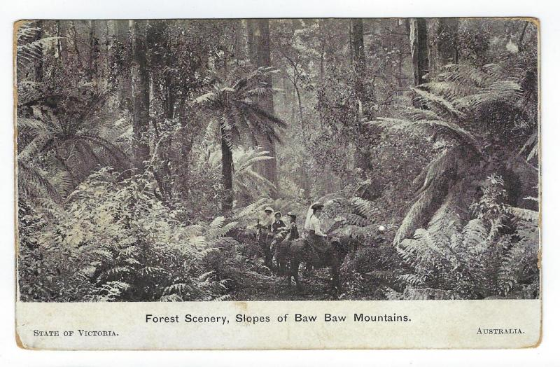 1908 Victoria Australia Postcard - Slopes Of Baw Baw Mountains (RR151)