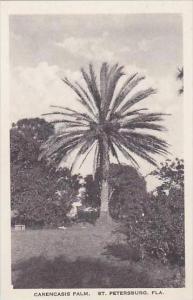 Florida St Petersburg Carencasis Palm Albertype