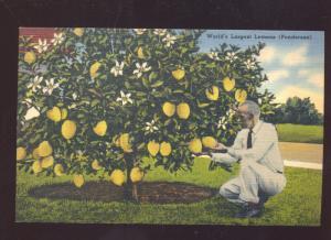 WINTER HAVEN FLORIDA WORLD'S LARGEST LEMONS FARMING VINTAGE POSTCARD