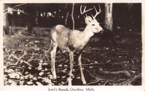 Grayling Michigan~Jerry's Ranch~6 Point Buck in Snowy Woods~1953 RPPC