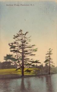 Rhode Island Pawtucket Sentinel Pines 1910
