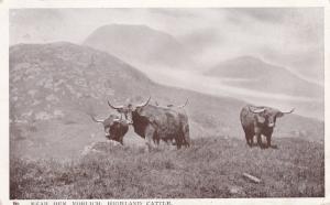 TUCK #5552: Near BEN YORLICH, Loch Earn, Scotland, PU-1906; Highland Cattle
