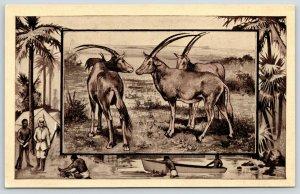 Great White Hunter~African Safari Series~Antelope~Jungle Border~1909 MJ Mintz PC