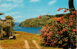 Man Of War Bay Tobago BWI Charlotteville Estate c1960 Vintage Postcard D73