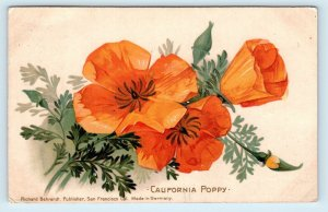 CALIFORNIA Golden POPPIES ~ c1900s Richard Behrendt Published Postcard