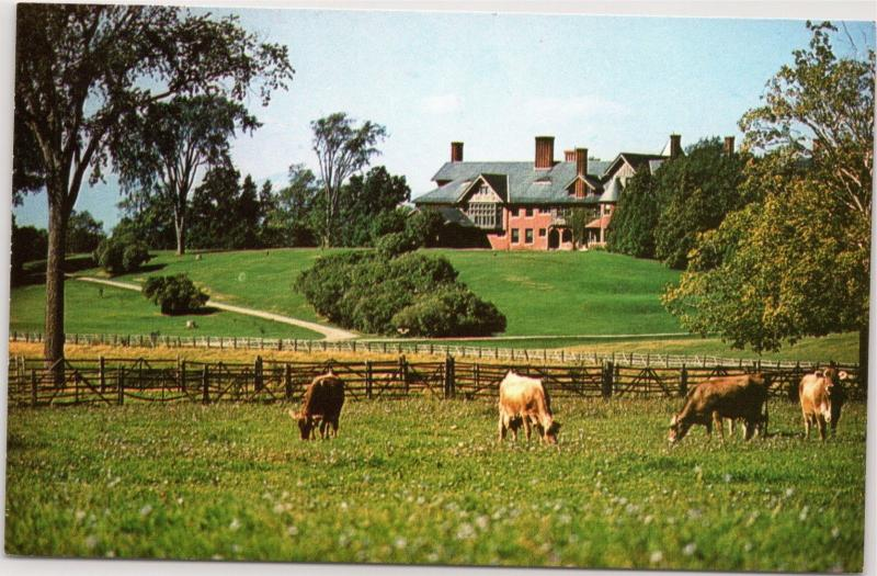 postcard Shelburne House, Shelburne Farms, Vermont cows grazing